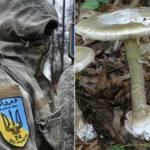 На Донбассе боевики «Айдара» наелись ядовитых грибов, посчитав их галлюциногенными
