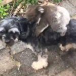 В Австралии детеныш коалы «оседлал» собаку, приняв ее за свою маму