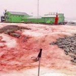 В Антарктиде около украинской базы снег окрасился в красный цвет