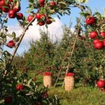 В Латвии фермеры просят привлечь к сельхозработам школьников и гастарбайтеров