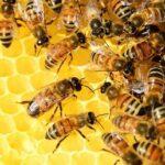 Ученые: из-за загрязнения воздуха пчелы болеют и живут меньше