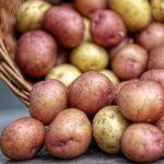 Минобороны Украины: военнослужащие ВСУ не едят российскую картошку