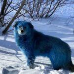 Собаки синего цвета шокировали жителей под Нижним Новгородом