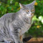 В Хабаровске продают кота-оберега от коронавируса за 6 млн рублей